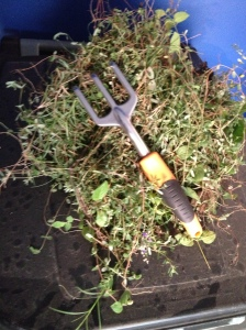 Pile of Weeds with my trusty Garden Trident